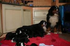 aisha Ibsen e 16 cuccioli a 15 gg di vita